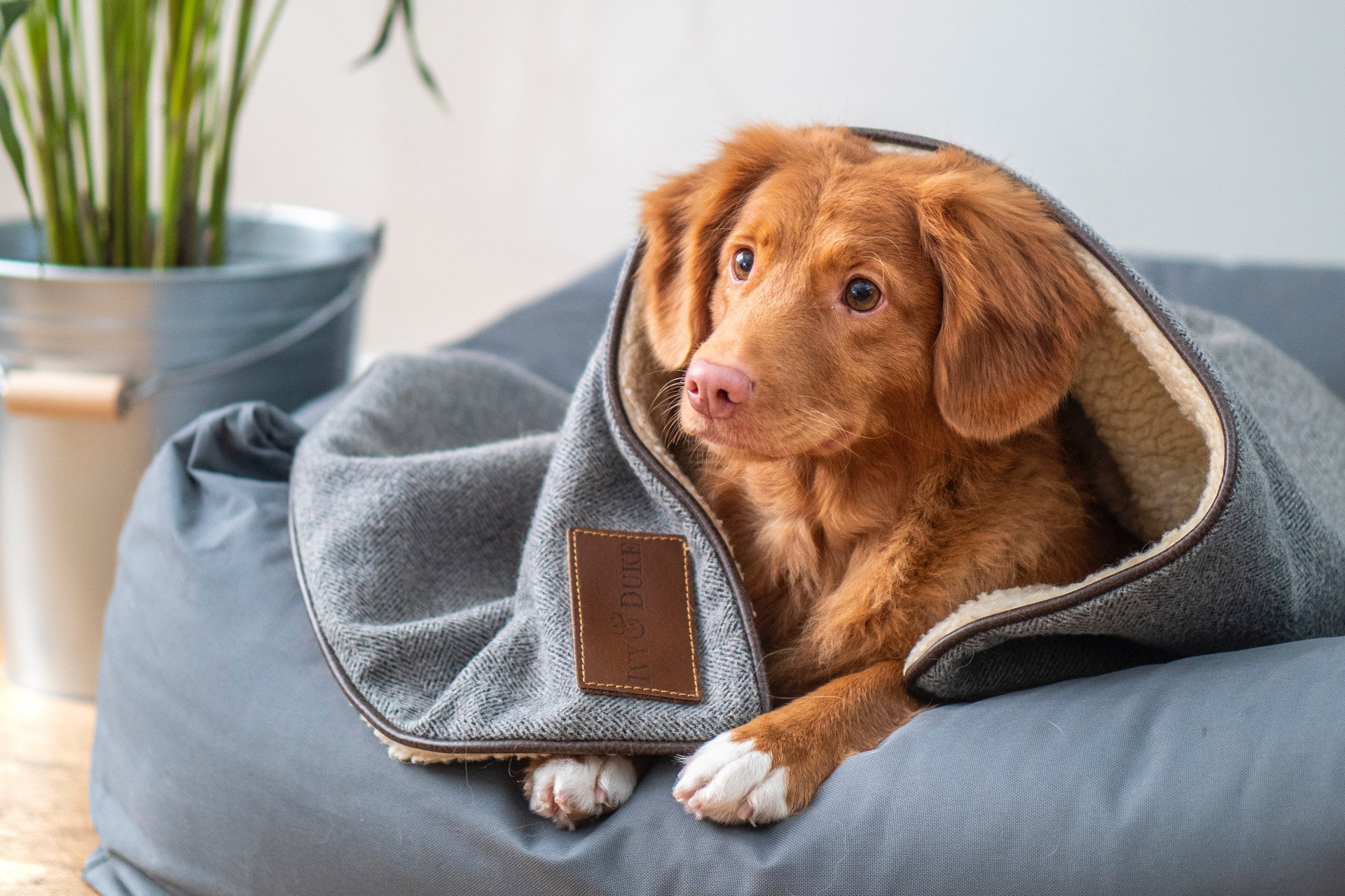 brown dog sitting on a puppy bed